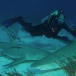 Dr. Erich Ritter bei der Arbeit mit Haien.