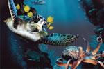 deepsea.jpg